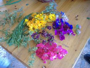 Photo: fiori e erbe aromatiche