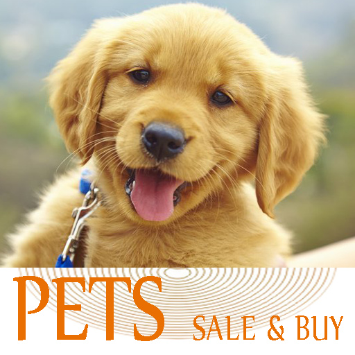 Pets For Sale Animals Puppies Dogs For Sale Apps Bei Google Play