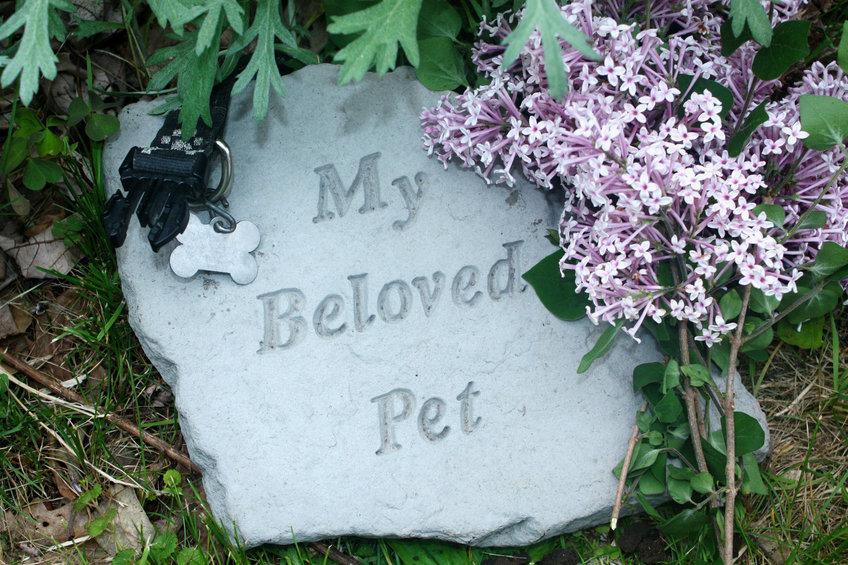 Hong Kong pet funerals aim for respectful farewell rather than landfill waste