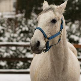 soul by Ana Rudolf - Animals Horses