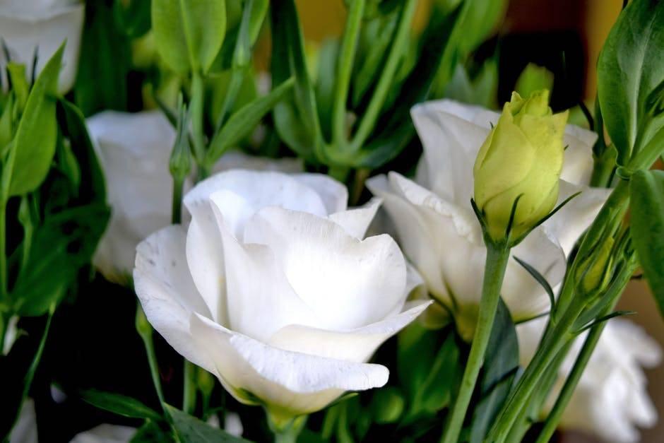 Eustoma Kwiat Do Bukietow Jak Go Pielegnowac Twojogrodek Pl