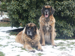 Photo: Beauty links, Braida rechts - beide 9 Jahre