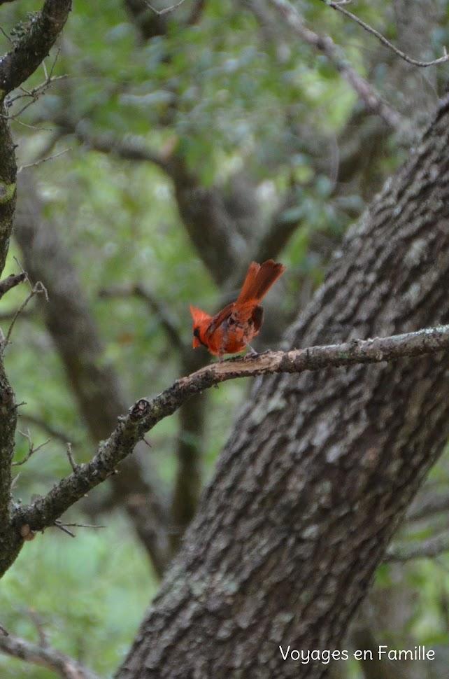 Bird vermilionville