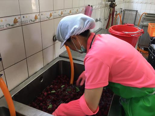 1081029食農教育-採洛神花