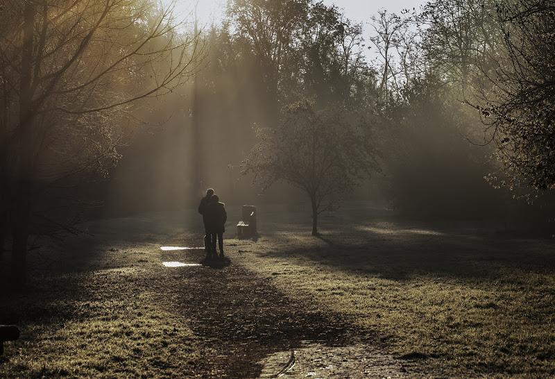 una fredda mattina d'inverno nel bosco di angelo27
