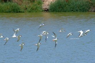 Photo: Terns
