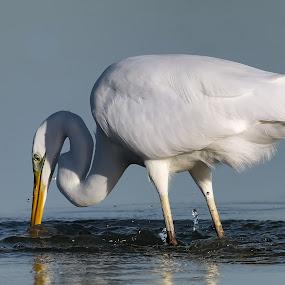 by Angelo Butera - Animals Birds
