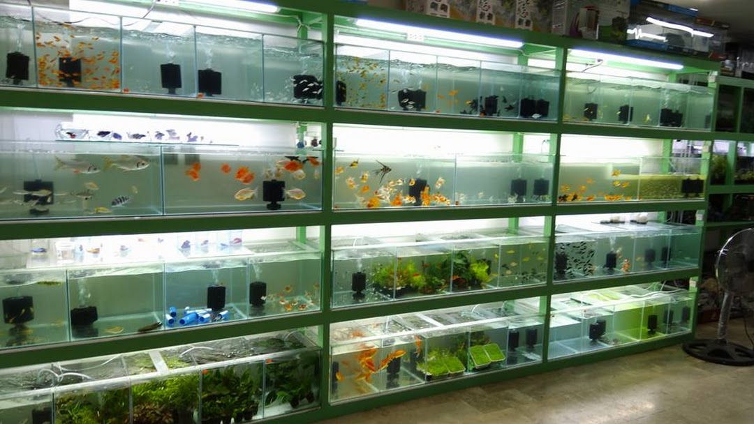 aquarium supply store