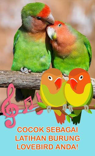 Download Suara Lovebird Master Lovebird Free For Android Download Suara Lovebird Master Lovebird Apk Latest Version Apktume Com