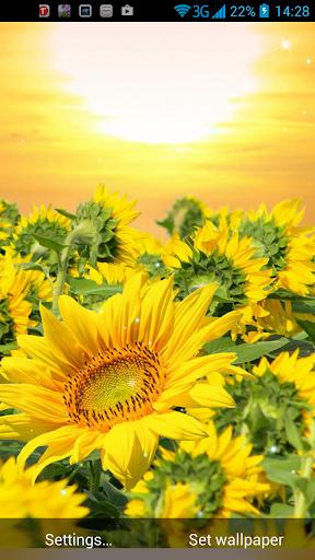 Golden Sunflower LWP