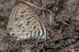 Photo: Butterlfly Borboleta