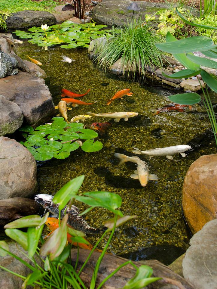 Photo: Koi Fish Pond in Rockaway, NJ