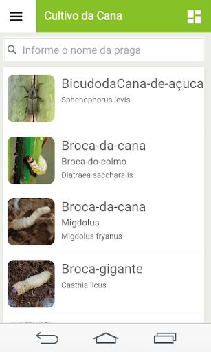 Cultivo da Cana-de-Açucar