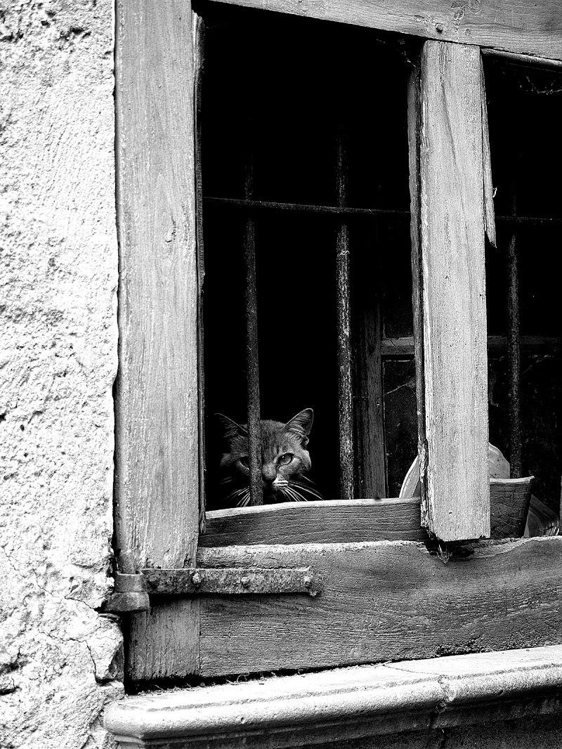 il micio alla finestra. di Naldina Fornasari