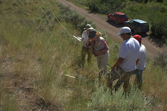 Photo: The field crew (L to R; Laura, Elizabeth, Dash, and Mike) reading a transect.