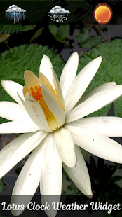 lotus hodiny počasí widget - náhled