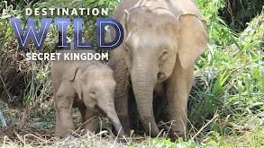 Destination Wild: Borneo's Secret Kingdom thumbnail