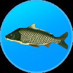 True Fishing. Fishing simulator 1.11.1.544