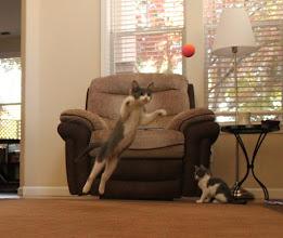 Photo: Flying Kittens