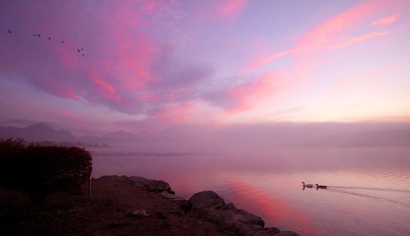 Alba rosa di vaniamoric