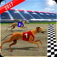 Wild Greyhound Dog Racing apk