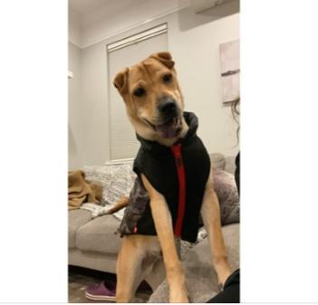Milo, MISSING Nov 13, 2019