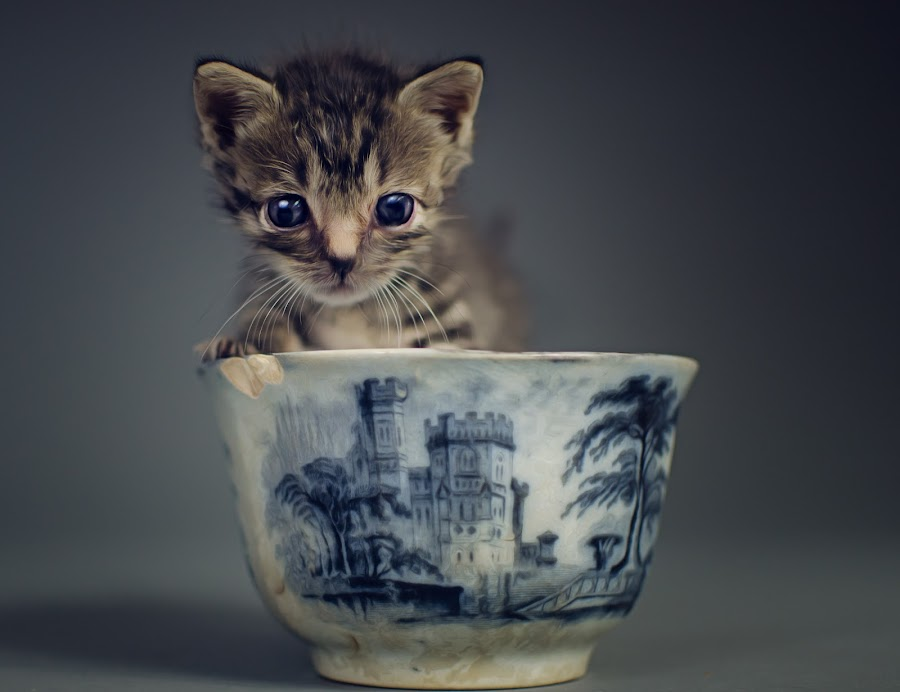 kitteh by Stacey Gammon - Animals - Cats Kittens