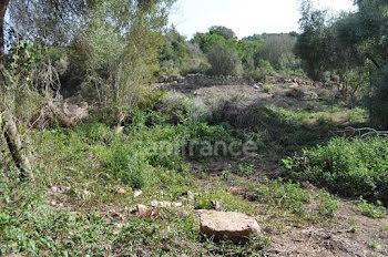 terrain à Pietrosella (2A)