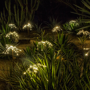 20151123Sonoran Light-031.jpg