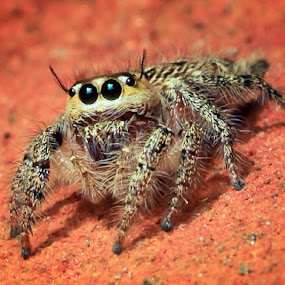 by Audy Sand - Animals Insects & Spiders