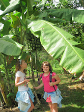Photo: Plantains on the tour of Finca Kobo. They plant them to distract the monkeys from the way more expensive cacao