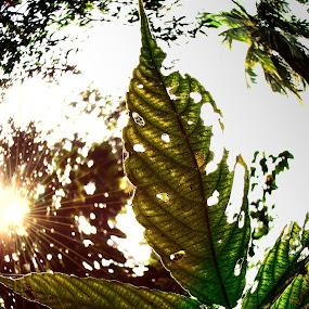 leeeeeeeeeeeee by Sayan Basu - Nature Up Close Leaves & Grasses