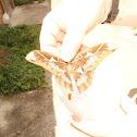 Mariposa Cuatro Espejos