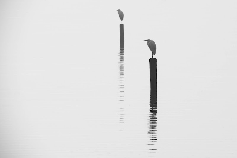 Sincronismi in controluce di Peter_Sossi