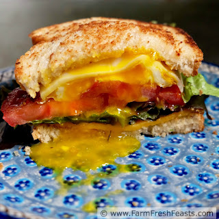Fried Egg, Lettuce, and Tomato Grilled Cheese Sandwich.