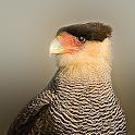 Birds of Patagonia icon