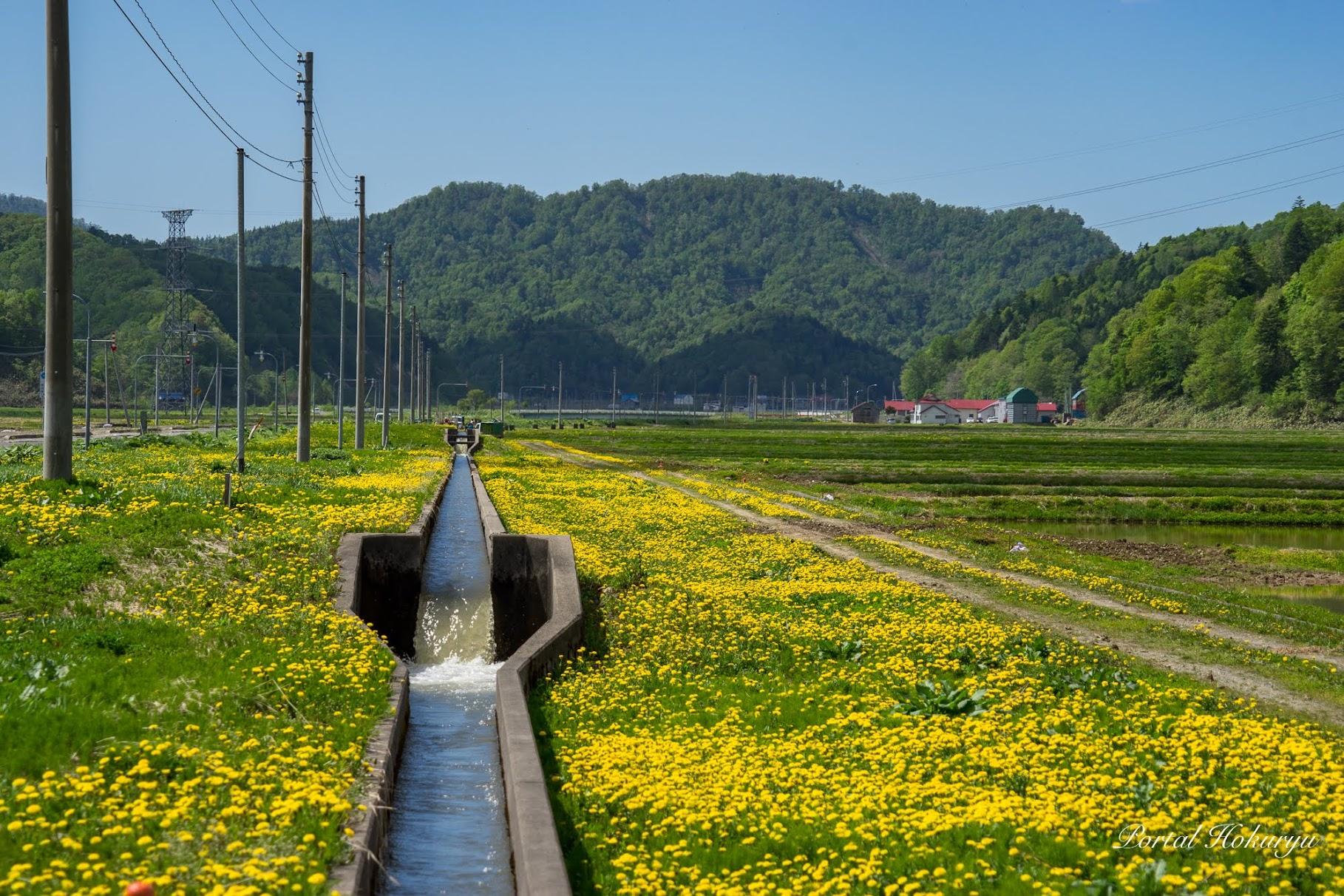 豊潤な用水路の流れ