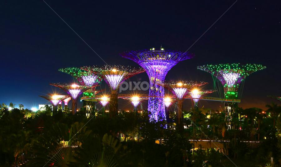 Giant Tree Light by Esther Pupung - City,  Street & Park  Vistas