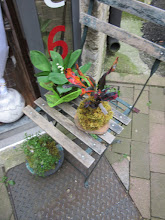 Photo: kokedama plante croton tarif 10 euros  Kokedama :muguet 7 euros