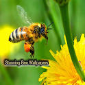 Stunning Bee Wallpapers icon