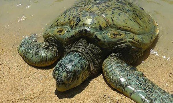 Serangan-Turtle-Island-Conservation-Centre