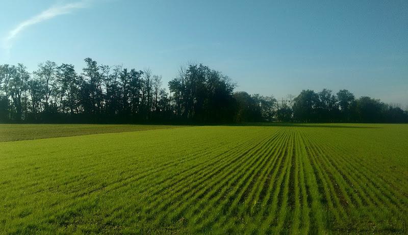 linee di erba  di Bobo