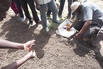 Photo: SRI Training in Ziguinchor.  [Photo by Devon Jenkins, Senegal, 2015]