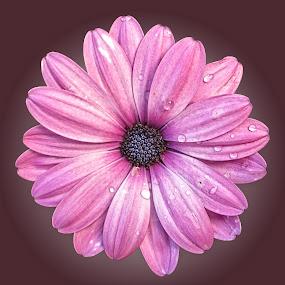OLI osteo 03 by Michael Moore - Flowers Single Flower (  )