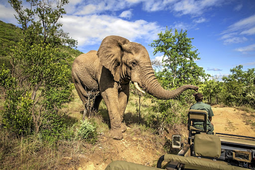 Big attraction: The Kruger National Park iStock