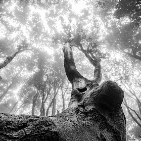 magical tree by Kiril Kolev - Black & White Abstract ( black and white, wildlife, trees, forest, beauty, woods,  )