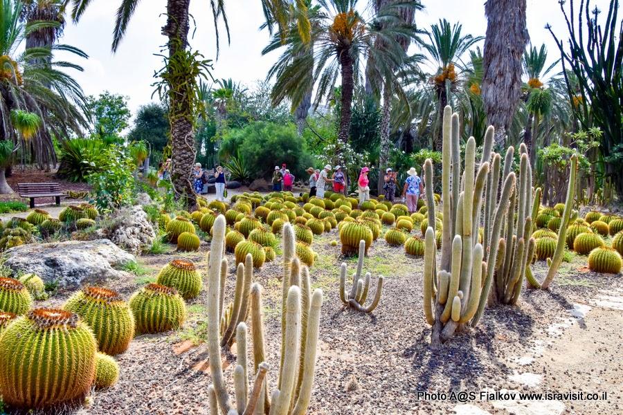 Экскурсия в саду кактусов. Тель-Авив. Гид в Израиле Светлана Фиалкова.