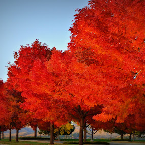 Fall by Awesome Pics - Nature Up Close Trees & Bushes ( fall colors, nature, bushes, trees, leaves, , leaf, autumn, fall, Tree, Nature, Sky )