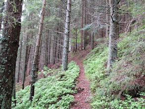 Photo: 09.Początek szlaku bardzo przyjemny - leśna ścieżynka.