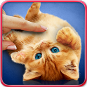 Purring cats, live wallpaper icon